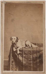 Fido, one of the Lincoln family dogs